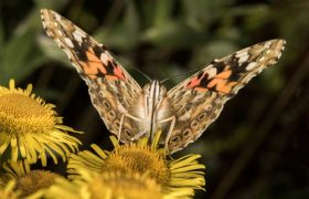 Six reasons to love butterflies – Rowan's rambles