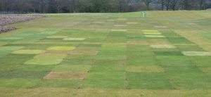 Turfgrass-Seed-STRI_trials