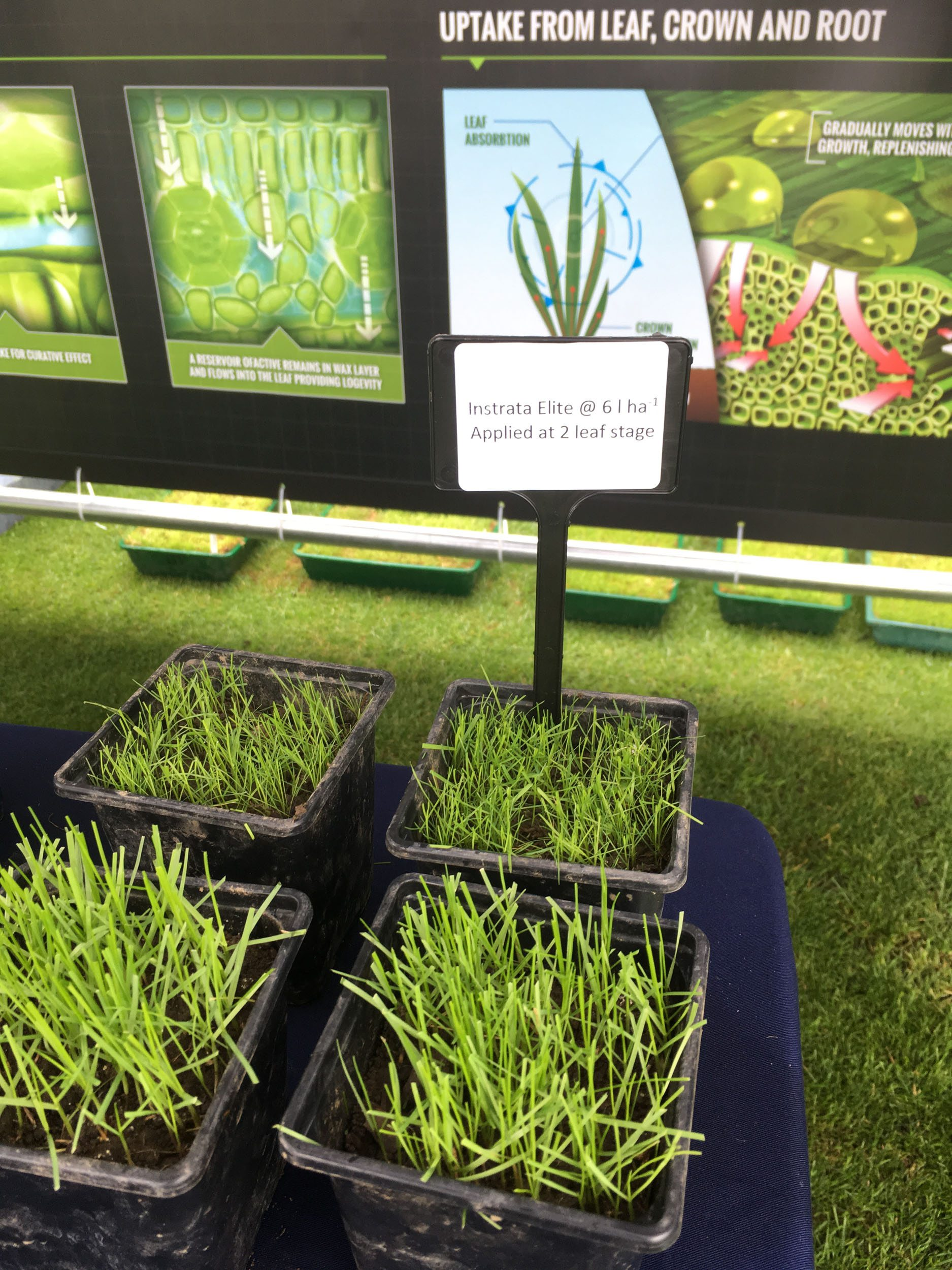 STRI Research shows how to make every seed count